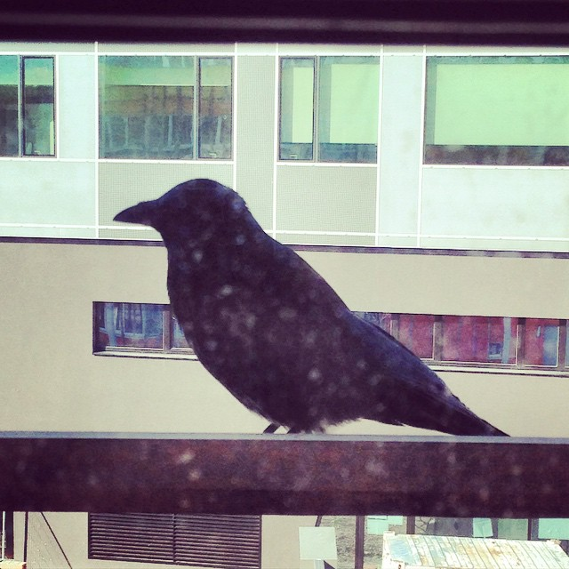 Look who has just visited us ? #lookoutthewindow #black #crow #wuvienna