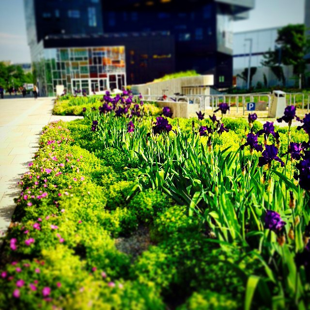 #flowerpower at #campuswu #? #? #? #? #colorful #spring @wuvienna #wuwien