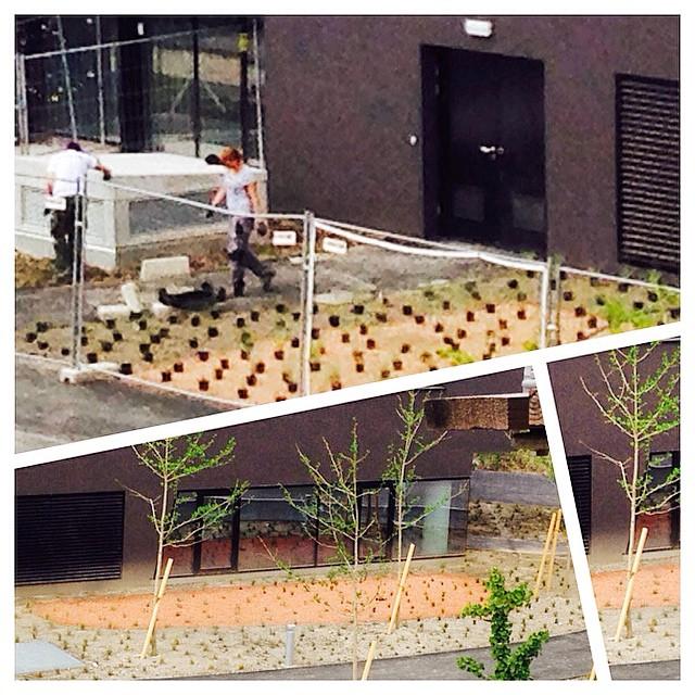 Gardeners are landscaping the D5 front gardens #?#? #gardening @wuvienna #D5 #hardworking #gardener